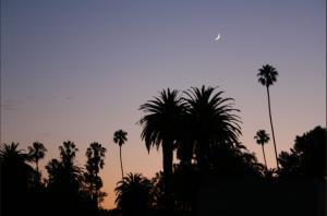 Palmes, nuit